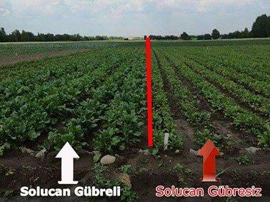 http://bioclub.com.tr/images/domateste-solucan-gubresi.jpg
